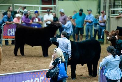 Tulsa_20191002_grand-drive-steers-20