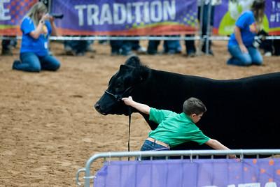 Tulsa_20191002_grand-drive-steers-23