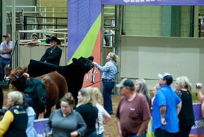 Tulsa_20191002_grand-drive-steers-21