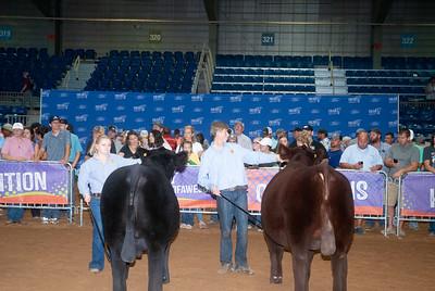 Tulsa_20191002_grand-drive-steers-3