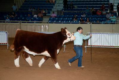 Tulsa_2019_steer_market-4