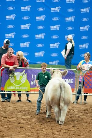 Tulsa_2019_steer_market-23