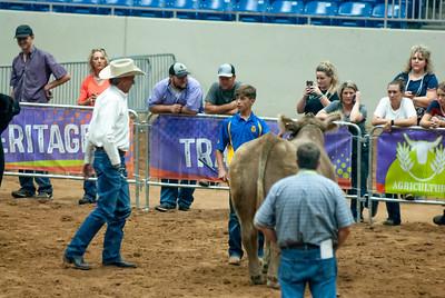 Tulsa_2019_steer_market-6
