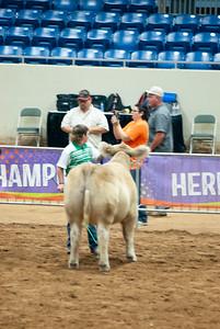 Tulsa_2019_steer_market-21