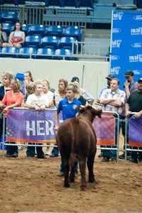 Tulsa_2019_steer_market-12