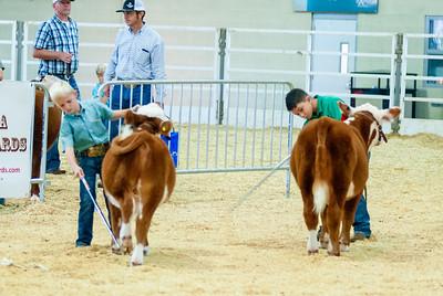 Tulsa_20191001_steers_miniherefords-8