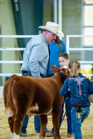 Tulsa_20191001_steers_miniherefords-20