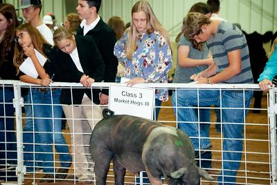 Tulsa_2019_livestock_judging-8