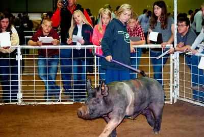 Tulsa_2019_livestock_judging-3