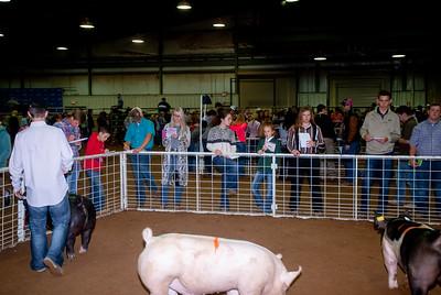 Tulsa_2019_livestock_judging-23