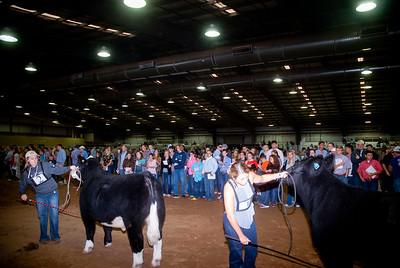 Tulsa_2019_livestock_judging-12