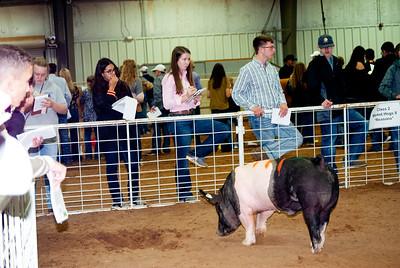 Tulsa_2019_livestock_judging-5