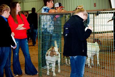 Tulsa_2019_livestock_judging-9
