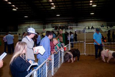 Tulsa_2019_livestock_judging-18