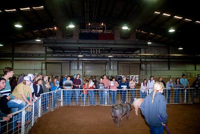 Tulsa_2019_livestock_judging-11