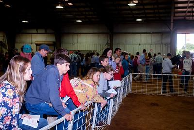 Tulsa_2019_livestock_judging-22