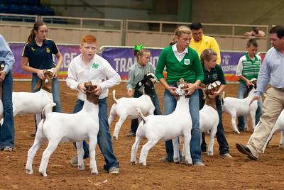 Tulsa_20191002_grand-drive-goats-18