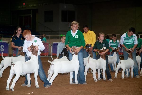 Tulsa_20191002_grand-drive-goats-19