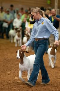 Tulsa_20191002_grand-drive-goats-14