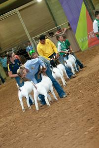 Tulsa_20191002_grand-drive-goats-21