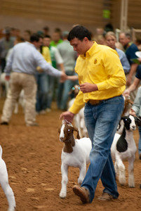 Tulsa_20191002_grand-drive-goats-12