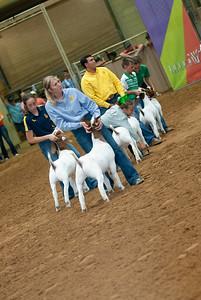 Tulsa_20191002_grand-drive-goats-20