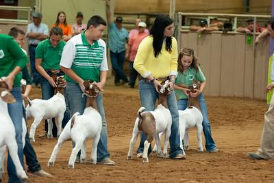 Tulsa_20191002_grand-drive-goats-16