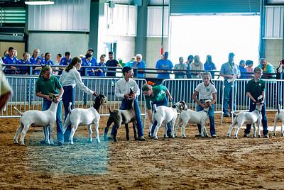 Tulsa_2019_goat_wether_showmanship-13