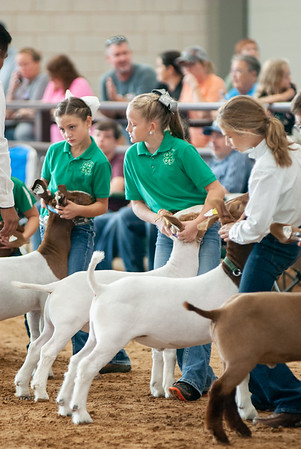 Tulsa_2019_goat_wether_showmanship-6
