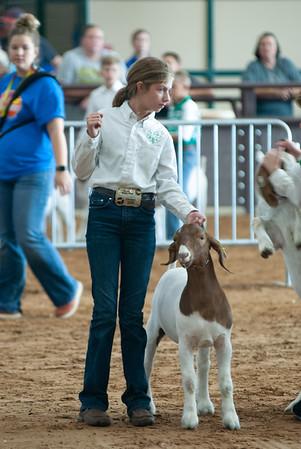 Tulsa_2019_goat_wether_showmanship-18