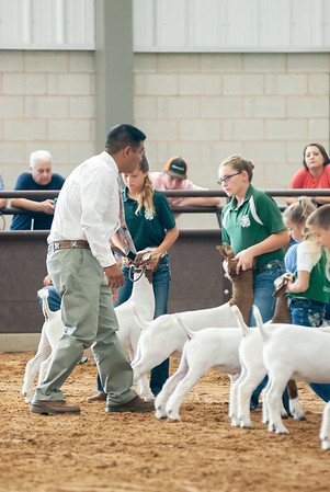 Tulsa_2019_goat_wether_showmanship-7