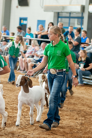 Tulsa_2019_goat_wether_showmanship-10