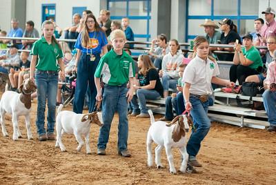 Tulsa_2019_goat_wether_showmanship-1