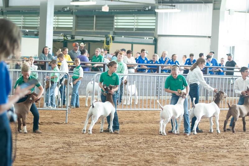 Tulsa_2019_goat_wether_showmanship-14