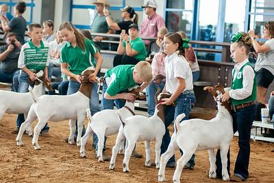 Tulsa_2019_goat_wether_showmanship-2