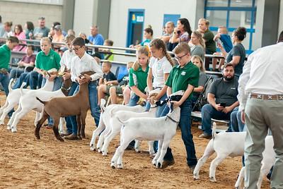 Tulsa_2019_goat_wether_showmanship-3