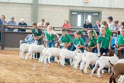 Tulsa_2019_goat_wether_showmanship-5