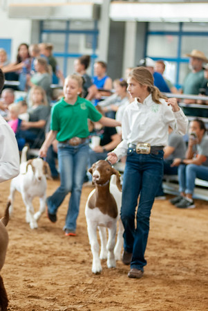 Tulsa_2019_goat_wether_showmanship-9