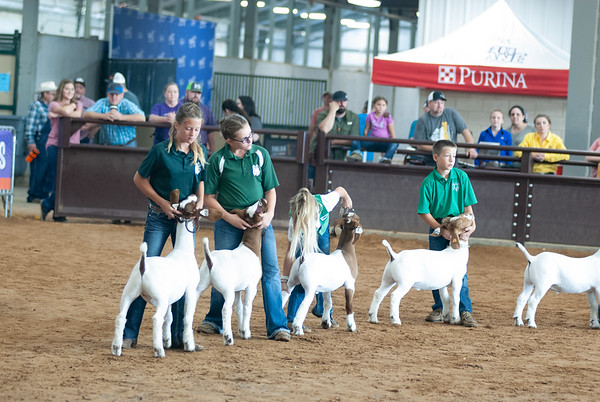 Tulsa_2019_goat_wether_showmanship-15