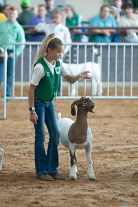Tulsa_2019_goat_wether_showmanship-19