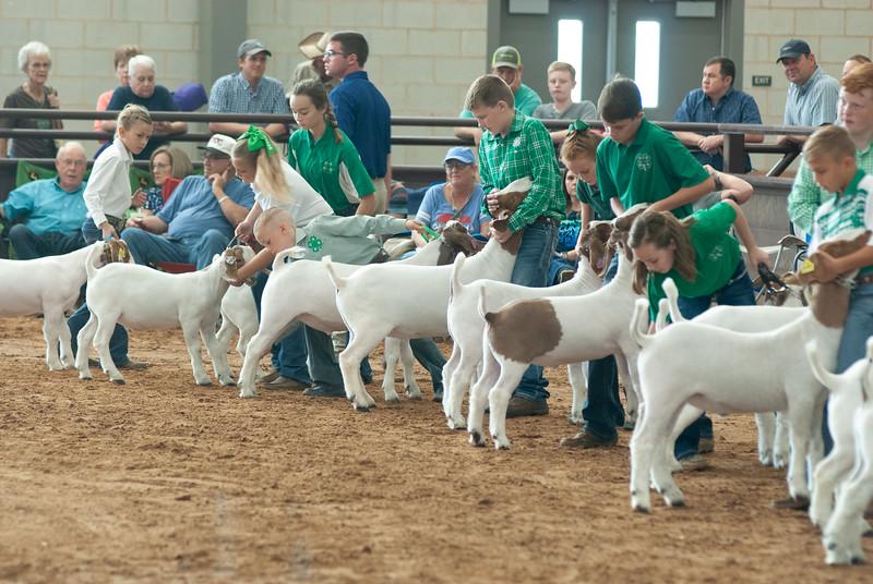 Tulsa_2019_goat_wether_showmanship-23
