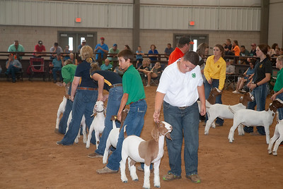 Tulsa_2019_goat_wether_day1-15