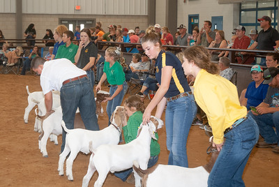 Tulsa_2019_goat_wether_day1-12