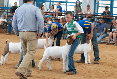 Tulsa_2019_goat_wether_day1-18