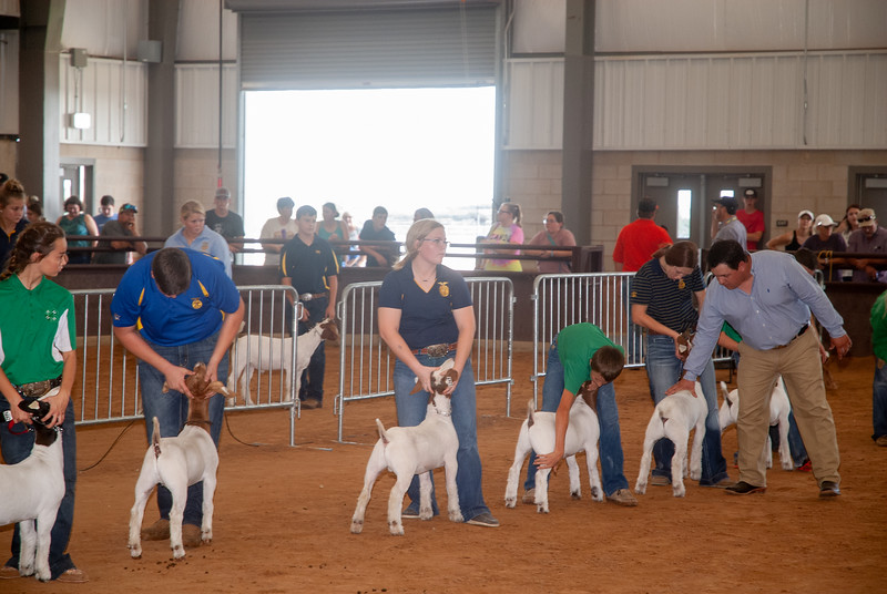 Tulsa_2019_goat_wether_day1-14