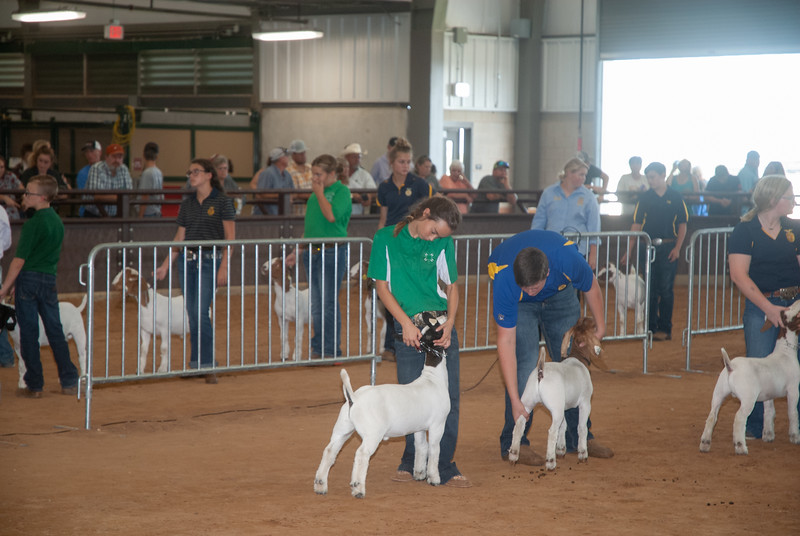 Tulsa_2019_goat_wether_day1-13