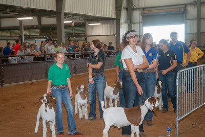 Tulsa_2019_goat_wether_day1-10