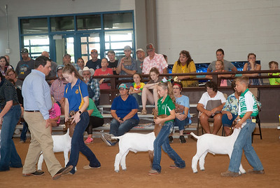 Tulsa_2019_goat_wether_day1-7
