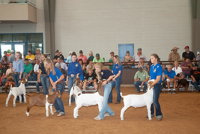 Tulsa_2019_goat_wether_day2-20