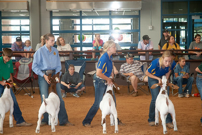Tulsa_2019_goat_wether_day2-8